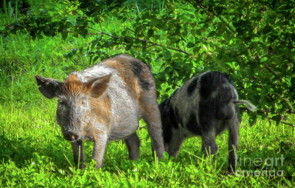 Photograph - Colorful Wild Hog by Tom Claud