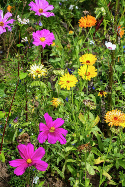 Photograph - Colorful Wildflowers by Arterra Picture Library