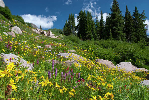 Photograph - Colorful Wildflowers In The Indian Peaks Wilderness by Cascade Colors