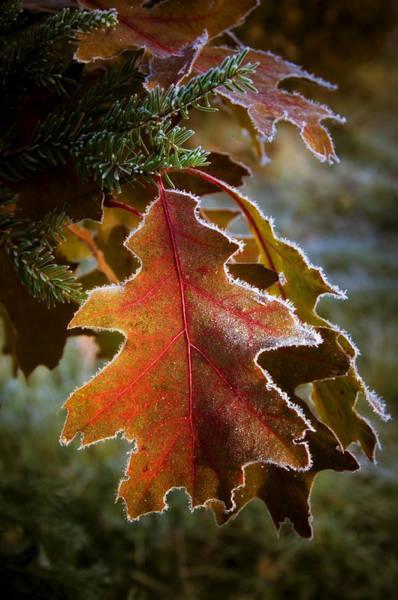 Wall Art - Photograph - Colorfull Autumn by Stanislovas Kairys