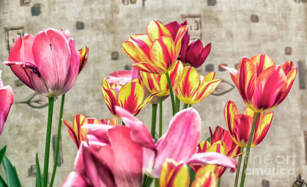 Photograph - Colorfull Tulips by Odon Czintos
