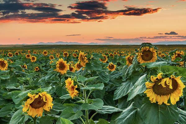 Photograph - Colors Of A Colorado Evening by John De Bord