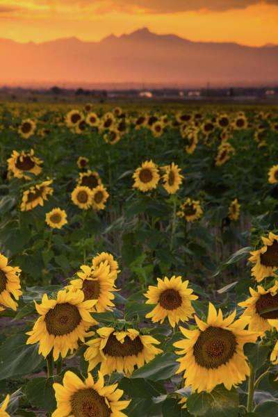 Photograph - Colors Of A Colorado Summer by John De Bord