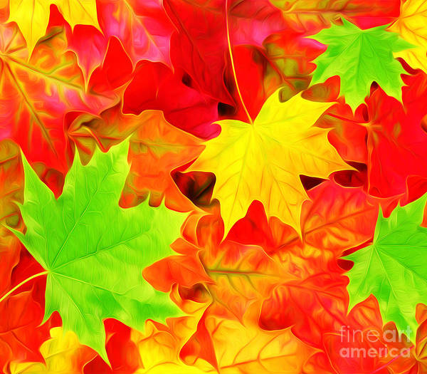 Fallen Leaves Photograph - Colors Of Autumn by Laura D Young