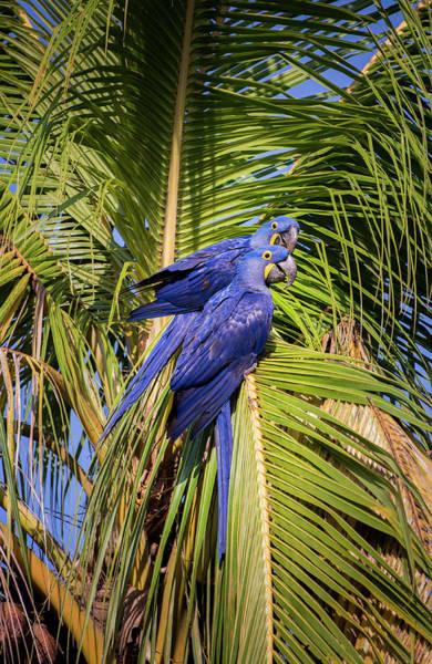 Photograph - Colors Of Brazil by Alex Lapidus