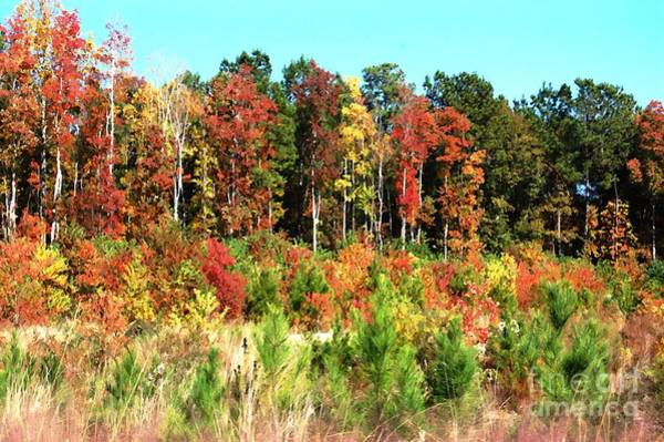 Photograph - Colors Of Fall by Donna Bentley