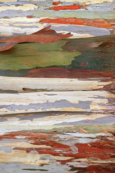Photograph - Colors Of Nature - Eucalyptus Tree Bark Abstract Vertical by Gill Billington