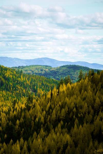 Photograph - Colors Of Sherman's Pass by Troy Stapek