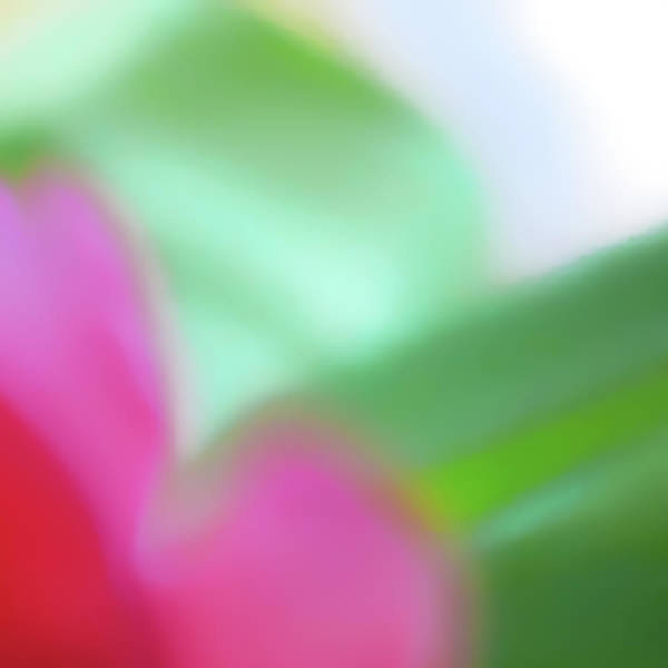 Photograph - Colors Of Spring Abstract No 2 by Menega Sabidussi