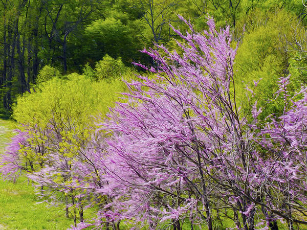 Photograph - Colors Of Spring by Paul Ross