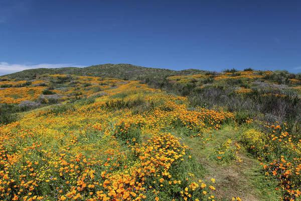Photograph - Colors Of Springtime by Cliff Wassmann