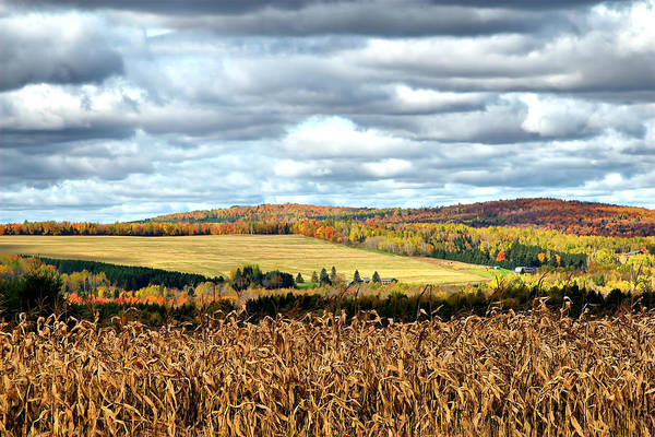 Aroostook County Photograph - Colors Of The Field by Gary Smith