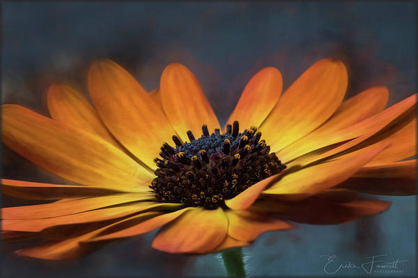 Photograph - Colors Of The Sun by Erika Fawcett