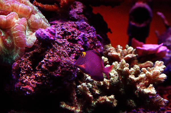 Colors Of Underwater Life Art Print