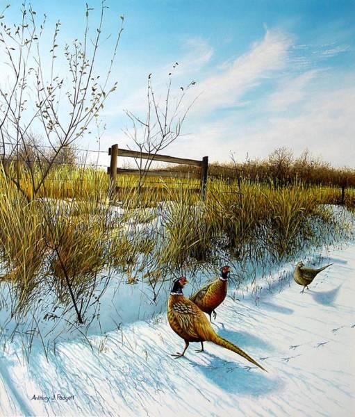 Colors Of Winter - Pheasants Art Print