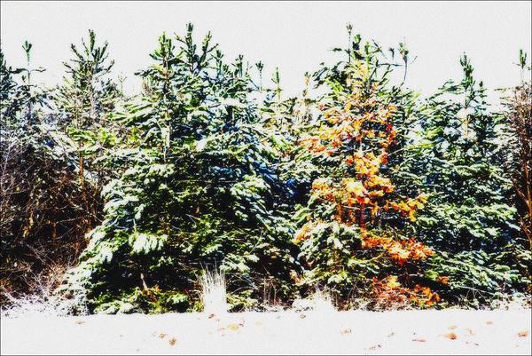 Coloured Trees  Art Print