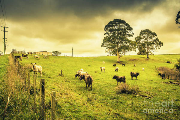 Dairy Cows Photograph - Colourful Australian Cattle Station by Jorgo Photography - Wall Art Gallery