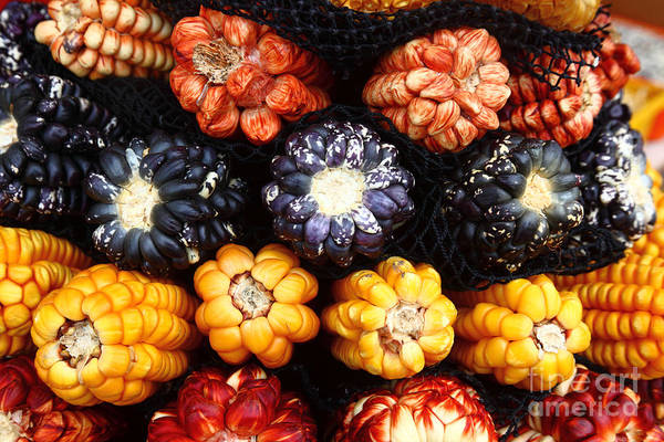 Photograph - Colourful Corn Varieties Peru by James Brunker