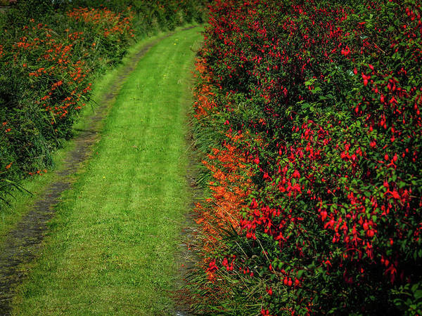 Photograph - Colourful Irish Country Road by James Truett
