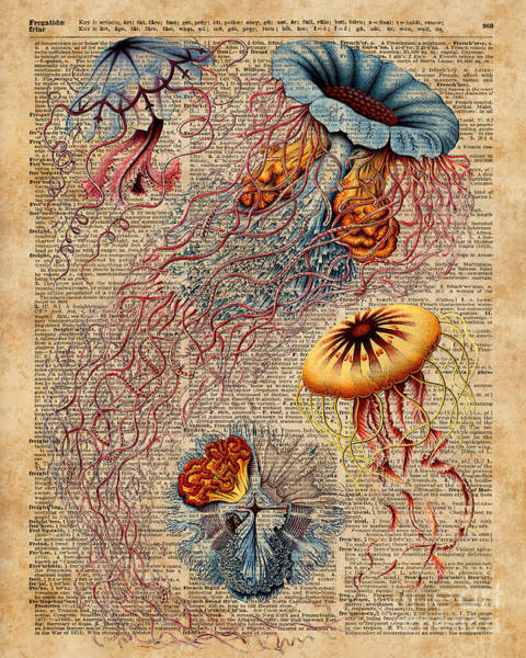 Tapestries Textiles Wall Art - Digital Art - Colourful Jellyfish Marine Animals Illustration Vintage Dictionary Book Page,discomedusae by Anna W