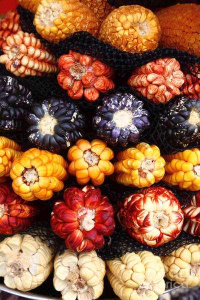 Photograph - Colourful Peruvian Corn Cobs by James Brunker