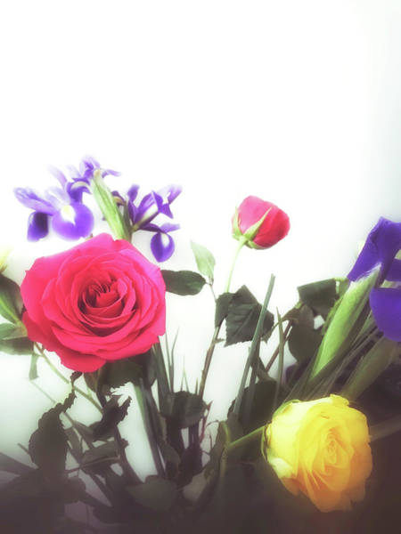 Wall Art - Photograph - Colourful Roses by Tom Gowanlock