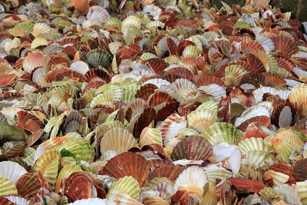 Photograph - Colourful Seashells by Aidan Moran