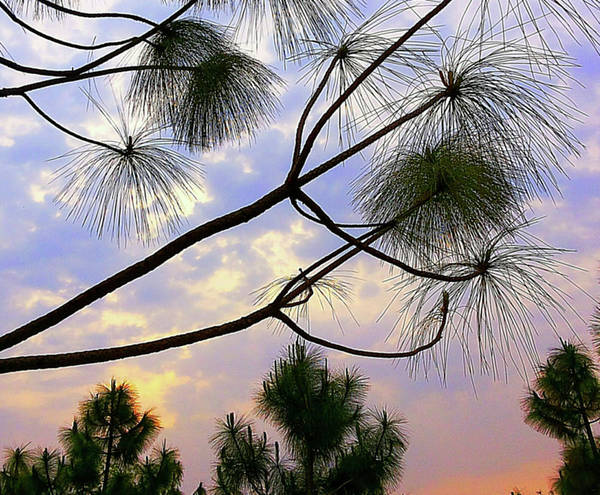Photograph - Colours In The Sky by Atullya N Srivastava