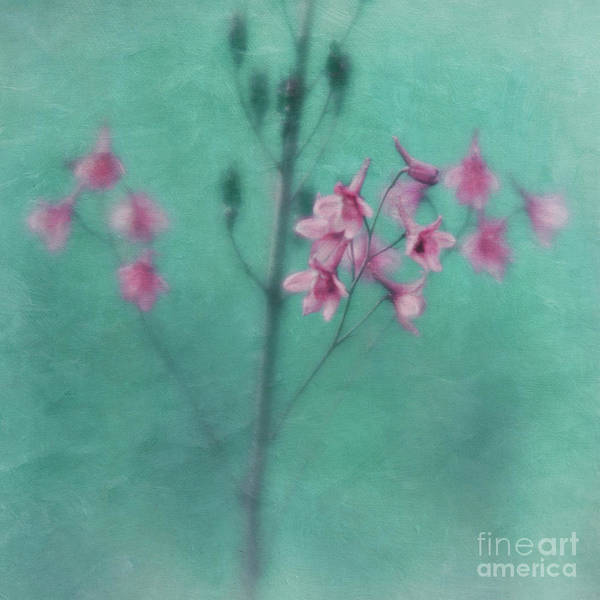 Wall Art - Photograph - Colours by Priska Wettstein