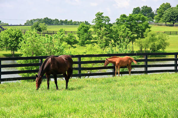 Photograph - Colt And A Horse by Jill Lang