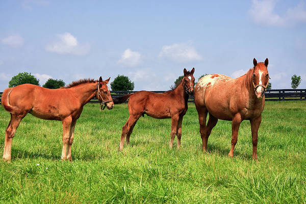 Photograph - Colts And Mother by Jill Lang