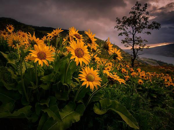 Rowena Photograph - Columbia Gorge Joy by Dan Mihai
