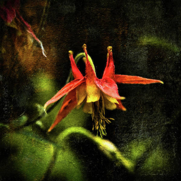 Photograph - Columbine 2016 Digital Painting by Fred Denner