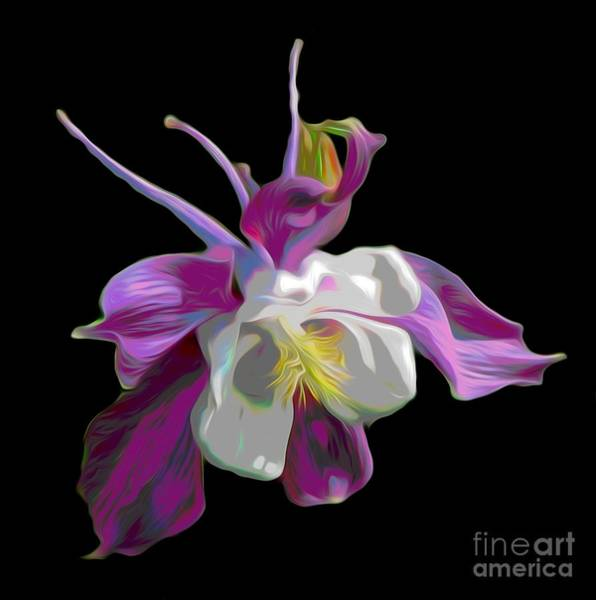 Photograph - Columbine Flower Macro Abstract  by Rose Santuci-Sofranko
