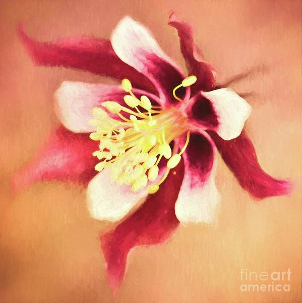 Photograph - Columbine Flower by Pam  Holdsworth