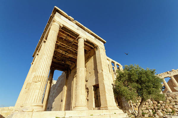 Stone Wall Art - Photograph - Columns Of A Temple And Olive Tree On The Acropolis Of Athens, G by Iordanis Pallikaras