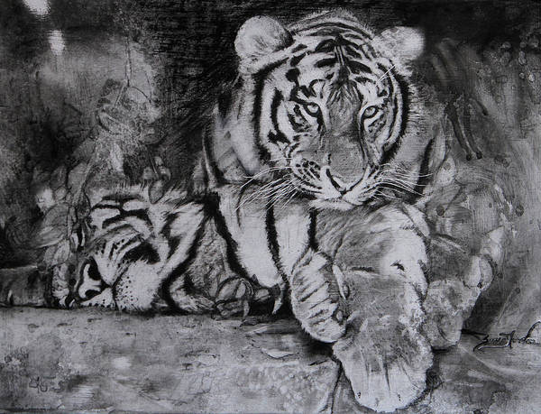 White Tiger Drawing - Comfort Zone - Tigers by Susie Gordon