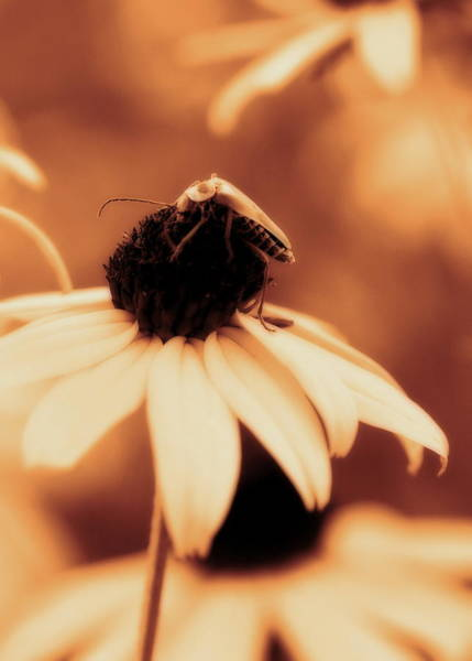 Photograph - Comfortably Perched - Gold Glow by Angela Rath