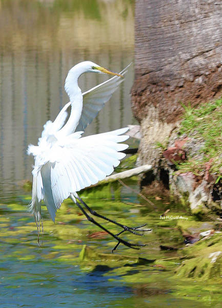 Photograph - Coming In For A Landing by Pat McGrath Avery