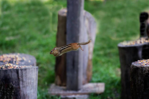 Photograph - Coming In For Landing On Log by Dan Friend