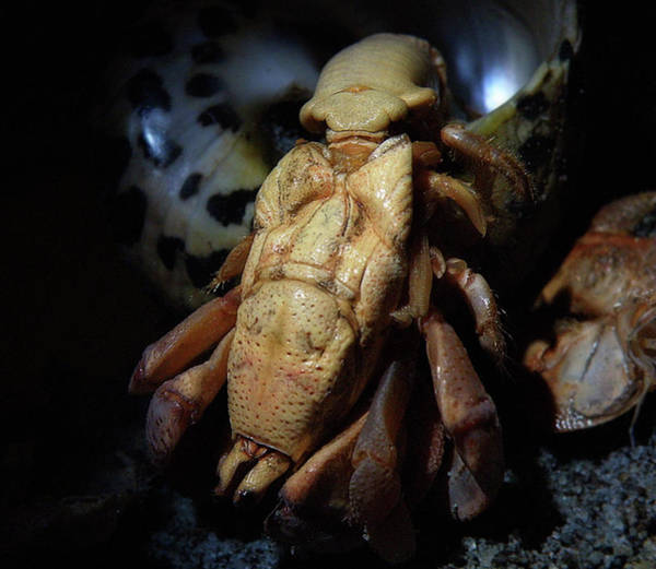 Photograph - Coming Out Of His Shell by Scott Hovind