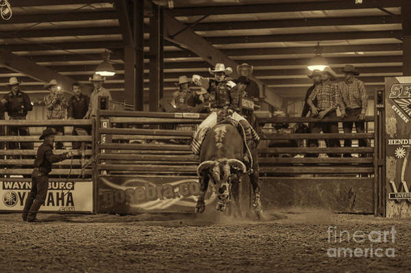 Photograph - Coming Out Of The Chute by Dan Friend