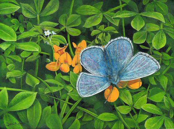 Painting - Common Blue On Bird's-foot Trefoil by John Neeve