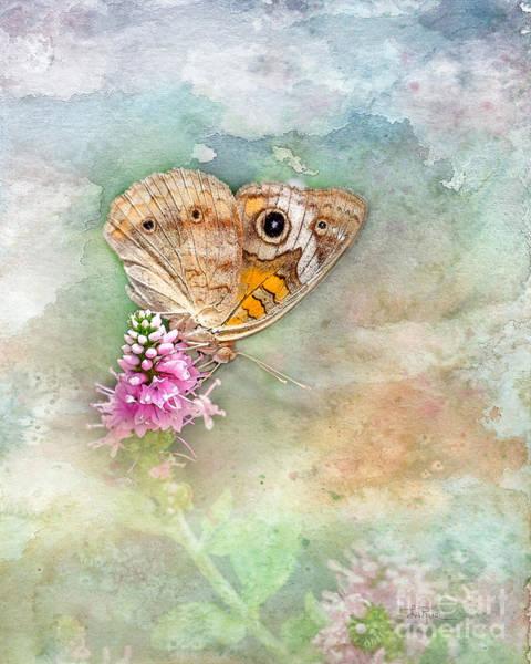 Buckeye Butterfly Wall Art - Photograph - Common Buckeye by Betty LaRue