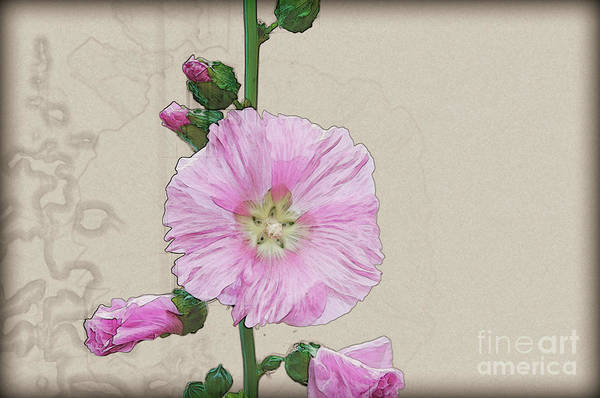 Wall Art - Photograph - Common Hollyhock  by Humourous Quotes