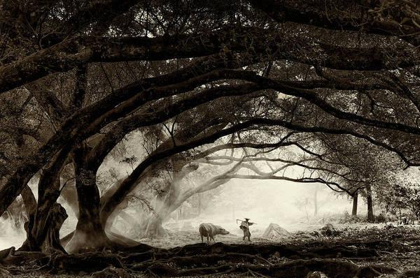 Photograph - Companionship by Usha Peddamatham