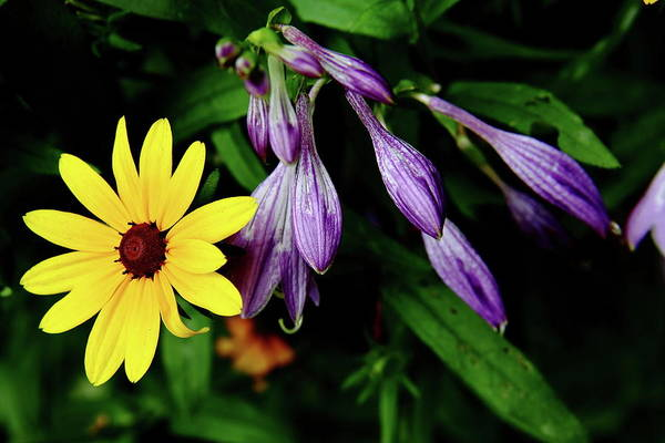 Photograph - Complementary Colors by Allen Nice-Webb