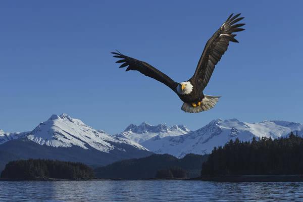 Wall Art - Photograph - Composite  A Bald Eagle Soars by John Hyde