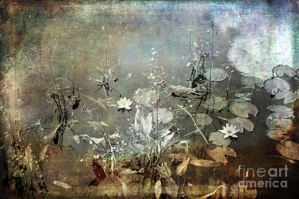 Photograph - Composition By Nature by Randi Grace Nilsberg