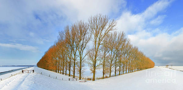 Meijer Wall Art - Photograph - Composition With Trees by Henk Meijer Photography